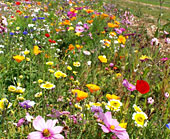 Spray Lawn Services - Pre-grown Wildflower Turf installed