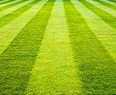 Spray Lawn Services - Initial lawn mowing service